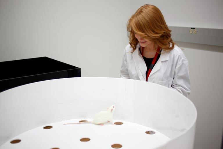 Ph.D. student Danielle Panoz-Brown looks at a rat used in memory study